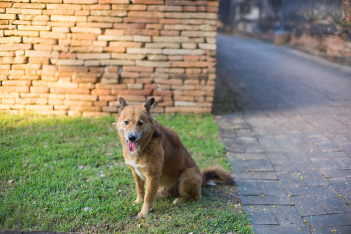 Dog Animal Themes Brick Brick Wall Day Dog Dog Lover Dogs Dogs Of EyeEm Light And Shadow Looking At Camera Nature No People One Animal Outdoors Pet Pet Photography  Pets Pets Corner Portrait Shadow Sitting Stray Animal Stray Dog Wall