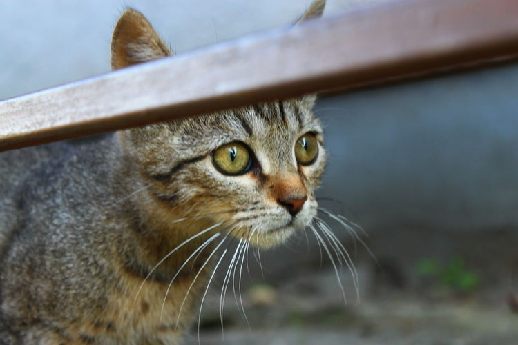 Close-Up Of Cat On Field Seen Through Fence