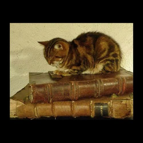 Chat gardien des livres anciens Chat Cat Cat Lovers EyeEmBestPics Books Old Books Graduel Antiphonaire Ancient Culture Ancient