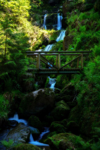 Beauty In Nature Bridge - Man Made Structure Day Footbridge Forest Growth Long Exposure Motion Nature No People Orton Effect Outdoor Photography Outdoors Plant Scenics Tranquility Tree Water Waterfall