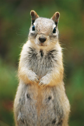 Analogue Photography Squirrel USA Animal Wildlife Daylight Diascan Fur Green Background No People Outdoors