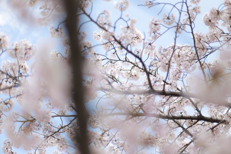EyeEm Selects Tree Beauty In Nature Flower Nature Fragility Branch Day Growth No People Springtime Outdoors Freshness Close-up Sky