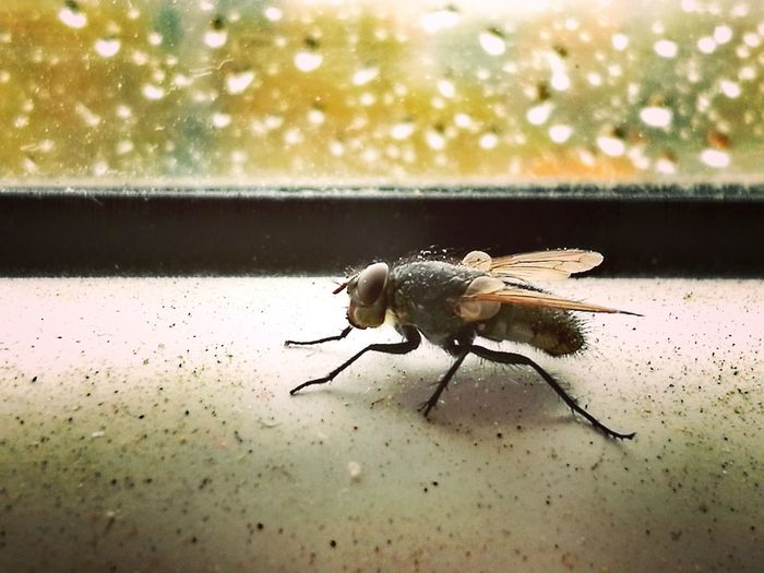 Home Fly No People Close-up Nature Mosquito Day Klaipeda City Klaipeda For Life ❤ Lithuania Popular Photos Followforfollow Lithuania Photography Rainy Days Window Beautiful Photographic Memory Photos Phone Art Phone Photography Rainy Day Rain Drops Rainy Days☔ Macro Macro Photography