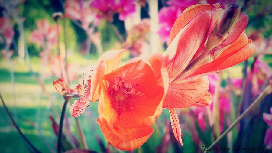 Colorfull Colorful At The Park EyeEm The Great Outdoors - 2016 EyeEm Awards Getting Inspired Showcase April Eye4photography  Things I Like Flower Photography Flowers_collection Flowers Flowerporn Coimbra Cantanhede 2016 EyeEm Awards Macro Macro_collection Macro Photography Macro_flower Walking Around Nature Nature Is Art Nature Beauty Nature_collection