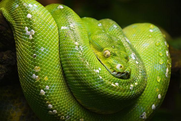 Close-up of green snake