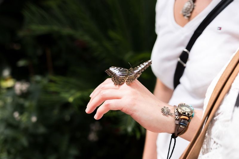 Person Holding Focus On Foreground Outdoors Day Zoology Nature One Animal Animal Themes Building Story Beauty In Nature Butterfly Insect Woman Jewelry Hand White