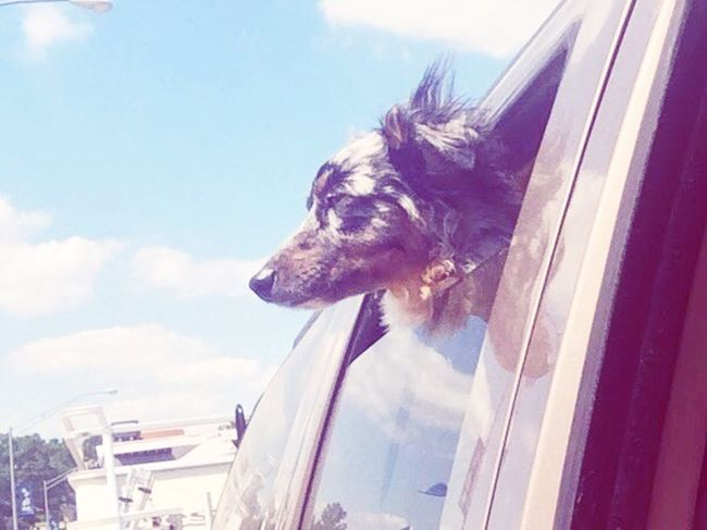 Wind through my fur Sky Animal One Animal Mammal Animal Themes Vertebrate #FREIHEITBERLIN Window Domestic Animals Pets No People Outdoors Domestic Day