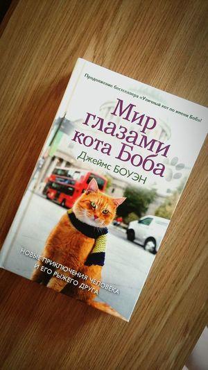 """Сейчас я буду читать """"Мир глазами кота Боба"""""""
