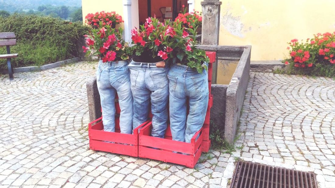 Fioritura Fiori In Jeans Esposizione Floreale Originale Flower Window Box Red Potted Plant Building Exterior Plant
