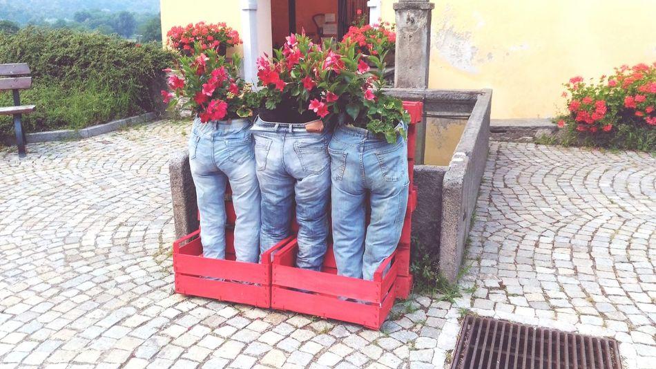 Fioritura Fiori In Jeans Esposizione Floreale Originale Flower Window Box Red Potted Plant Building Exterior Plant