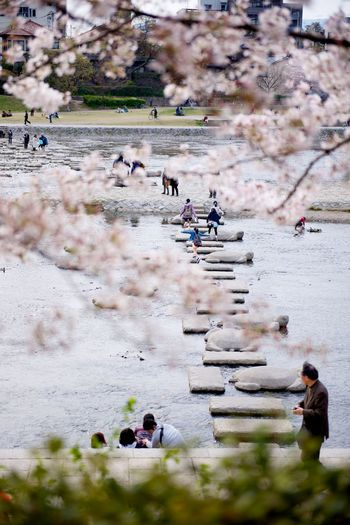 Close-up of cherry blossom tree against river