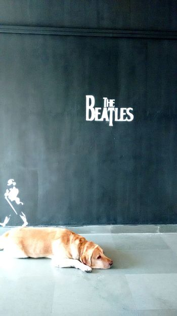 Beatles Dog Johnny Walker Love For Painting First Eyeem Photo