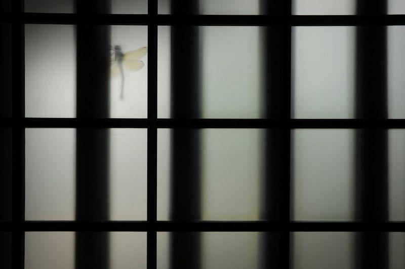 Close-up of a window