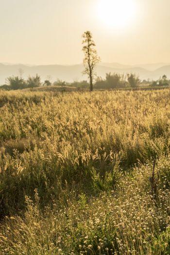 Plant Field Sky Landscape Tranquility Tranquil Scene Land