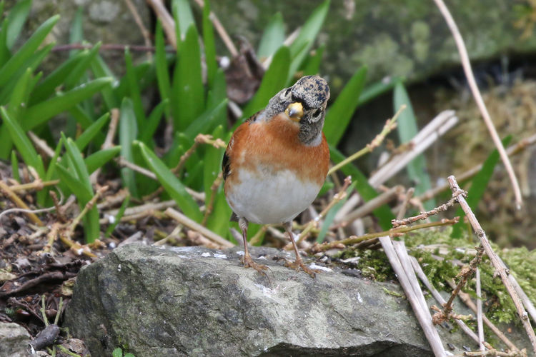 """""""Curiosity"""" Animal Animal Themes Animal Wildlife Animals In The Wild Vertebrate One Animal Bird Perching Close-up No People Nature Day Plant Focus On Foreground Robin Solid Rock - Object Outdoors Rock Selective Focus"""