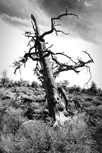 Nature Blackandwhite Dead Tree Haunting  Outdoors Ansel Adams Would've Felt At Home Here