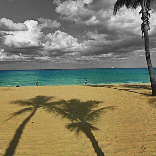 Instahub Igser Instagramgreatestshots Instagram instagram ig_pic instagramer igphoto icamdaily igtoppics gramshare igdaily webstigram world_captures picoftheday palmtrees pixlar photorestra photoshare