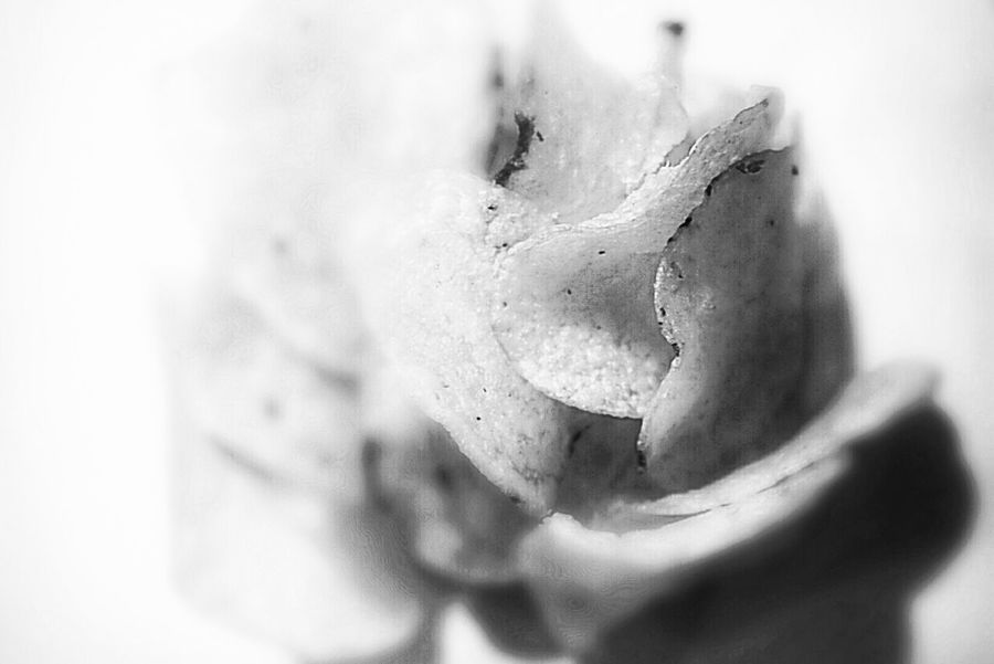 Abstract Close-up No People Flower Potato Potato Chips Bnw_captures Bnw Photography Blancoynegro Flordelapatata Flor Patata Patatas Patatasfritas Patatas Fritas😍chips PatatasDeluxe Food Food And Drink Food Photography Visual Feast