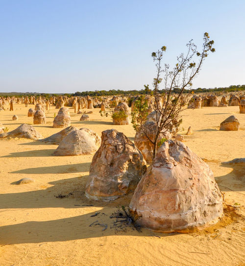 Scenic View Of The Pinnacles In Nambung National Park Against Clear Sky