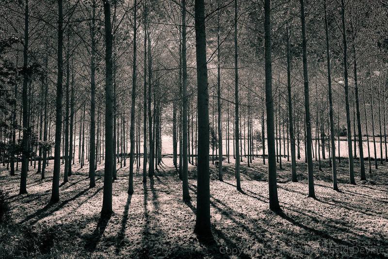 One of the images from my upcoming exhibition France Nature Trees Wood WoodLand