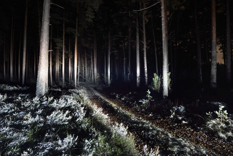 Trees growing in forest at night