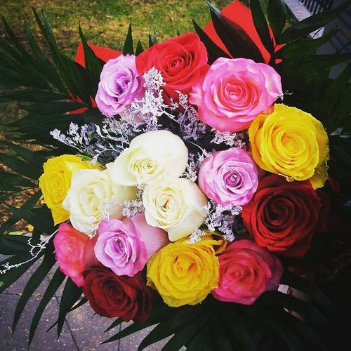 Flower Rose - Flower Multi Colored High Angle View No People Pink Color Variation Fragility Close-up Indoors  Bouquet Day Beauty In Nature Flower Head Nature Freshness Roses🌹🌹🌹 19❤️