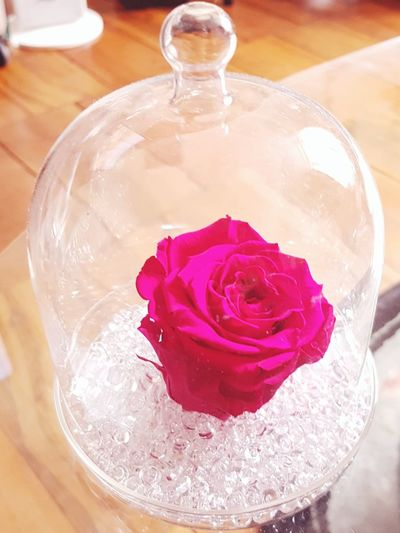 Rose - Flower Rose🌹 Beauty In Nature Beauty In Ordinary Things Beauty Beauty And The Beast Belle Et La Bete Rose Petals Single Rose