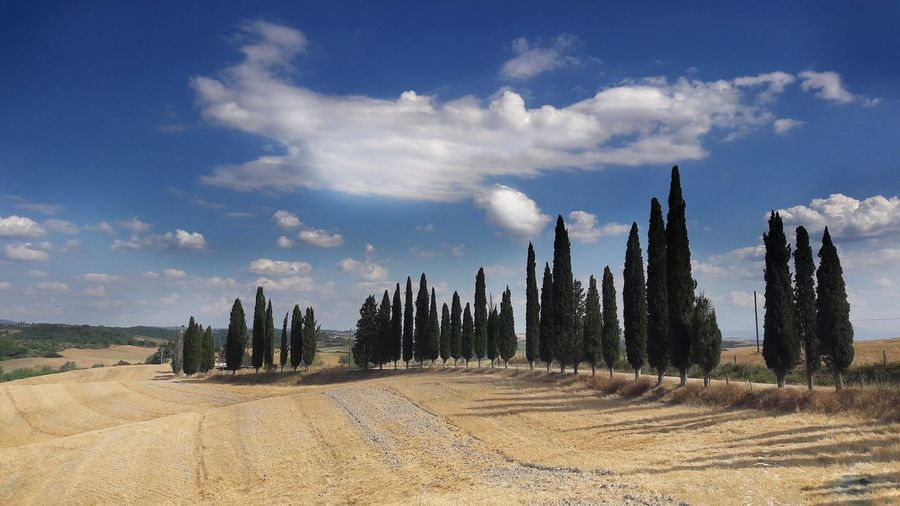 Tuscany classic landscape with cypress Cypress Cypress Tree Fields And Sky Fieldscape Fields Italy❤️ Italy Tuscany Countryside Tuscany Toscana Panoramic Landscape_Collection Fields Toscany Tuscany Toscana Sky Landscape Pinaceae Pine Wood Countryside