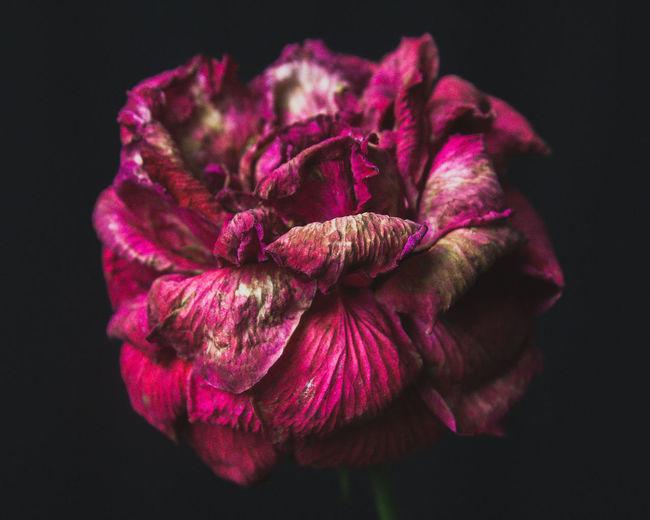 Flower no. 5