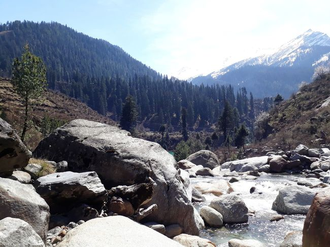 Flowing Stream Boulders Tree Mountain Forest Snow Pine Tree Pinaceae Sky Landscape Pine Woodland Snowcapped Mountain Tree Area Rocky Mountains Snow Covered Mountain Range WoodLand Snowcapped Evergreen Tree Wilderness Physical Geography