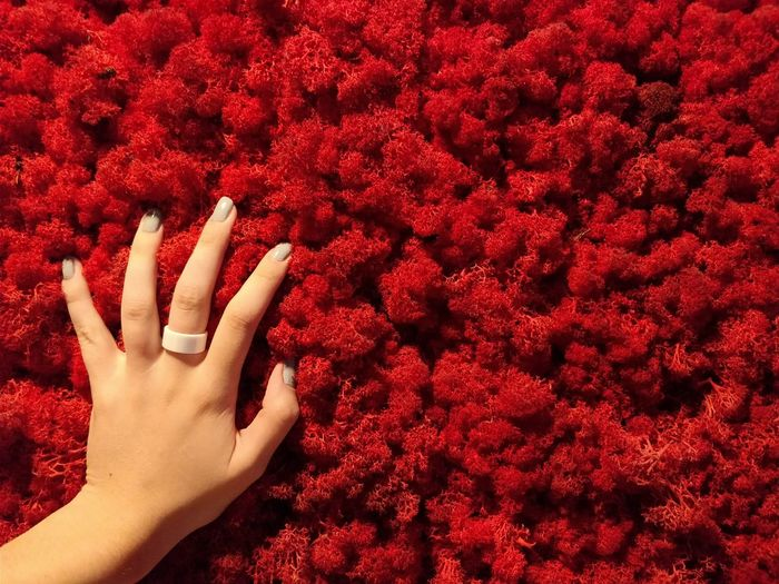 Coral Corals Coral Reef Coral Red Coral Colored Red Color Copy Space Backgrounds Red Human Hand Human Body Part People Nail Polish One Person Lifestyles Indoors  Adult Close-up Fingernail One Woman Only Only Women Adults Only International Women's Day 2019
