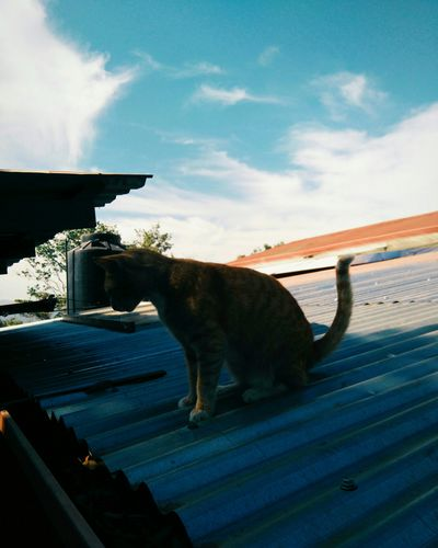 Costa Rica Cat Gato Nubes Y Cielo SonyClouds And Sky Sony Experia M4 Aqua Outdoor Outdoor Photography