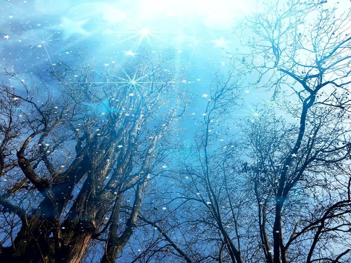 Good Night My Lovely Friends Xoxoxoxo Tranquility For My Friends 😍😘🎁 Artistic Expression Expression Artistique Express Yourself ❤ Cold Outside,time For Creativity😎 I Make My World The Way I Like It I'm A Edit-maniac😄😍 Playing With Effects Beauty In Nature Bare Trees