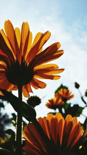 Flowers Okara