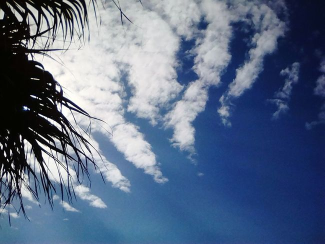 Low Angle View Sky Cloud - Sky No People Nature Outdoors Tree Day Beauty In Nature Daytime EyeEmNewHere The Great Outdoors - 2017 EyeEm Awards Dramatic Sky Beauty In Nature Scenics Nature Tranquil Scene Sunlight Travel Figueira Da Foz, Portugal The Street Photographer - 2017 EyeEm Awards