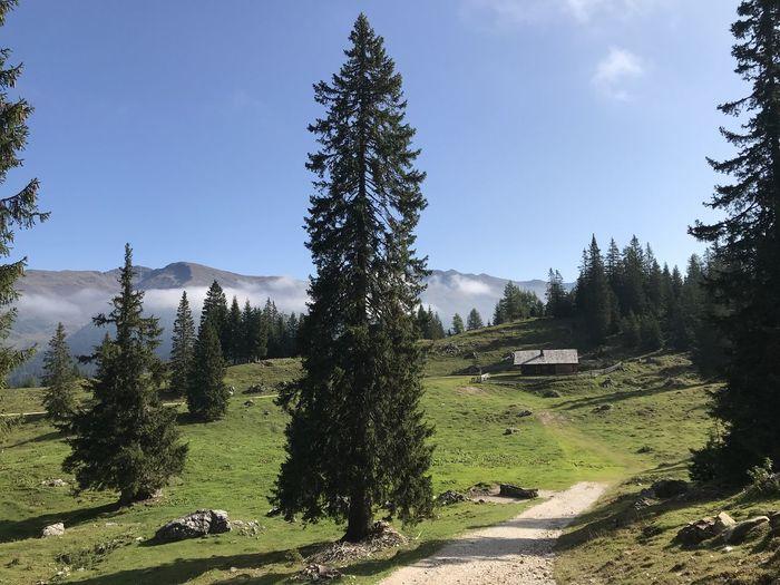 Hiking trail in