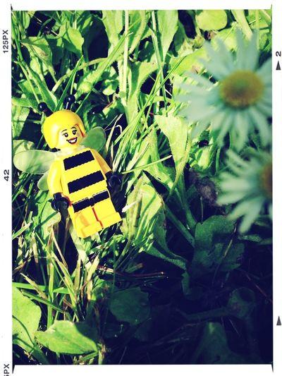 LEGO Watch The Flowers Grow