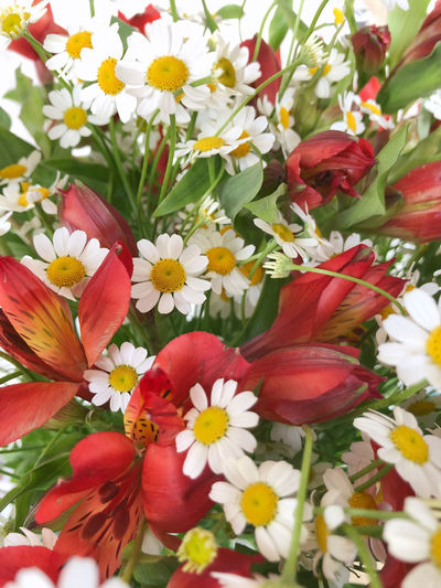 Close-up of multi colored flowering plants
