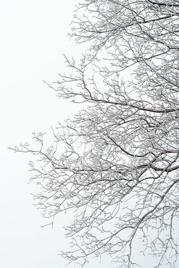 Snow covered tree Tree Branch Plant Low Angle View No People Sky Bare Tree Nature Beauty In Nature Day Tranquility Outdoors Scenics - Nature Cold Temperature Fragility Snow Snow Covered Icecold Nikon Bnw Blackandwhite Bnw_collection Trees White Background White Color The Minimalist - 2019 EyeEm Awards