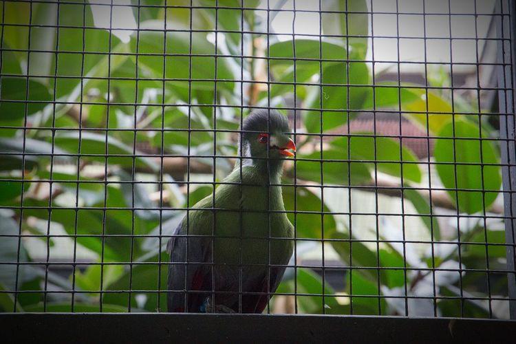 *chirp chirp* Zoo Wildlife Beak Cage Bird Zoology Brookfield Zoo Brookfield, IL