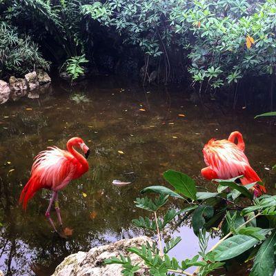 Flamingos Birds Flamingo Wildlife Wildlife & Nature Nature Nature Photography Travel Photanaka Showcase: November
