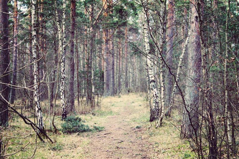 Trees ?