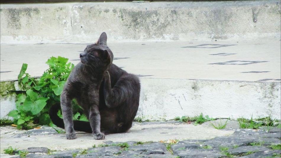 The Cat Life.. in Eyeem Lisbon Adventure... Cat Life The Global EyeEm Adventure - Lisbon Global EyeEm Adventure - Lisbon EyeEm Cats