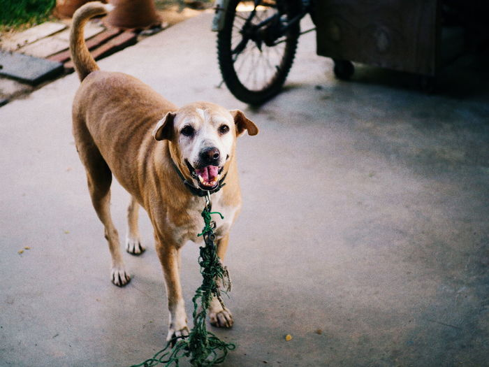 Animal Themes Dog Pets Domestic Animals One Animal Mammal Portrait No People Outdoors Day Close-up Nature Horizontal Filmlook VSCO