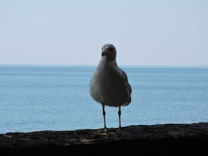 Seagull perching on a sea against clear sky