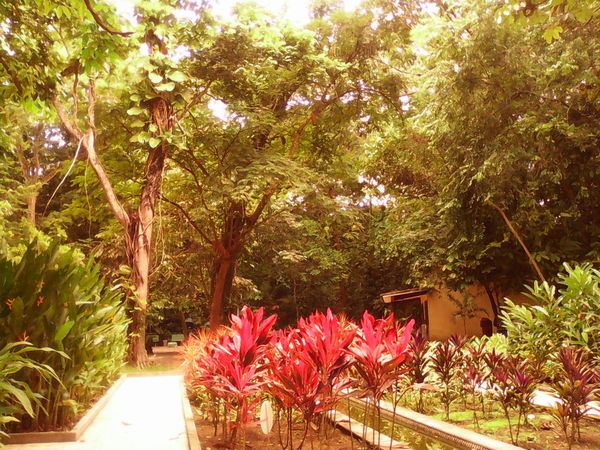 Flowers,Plants & Garden @pure Nature Collection