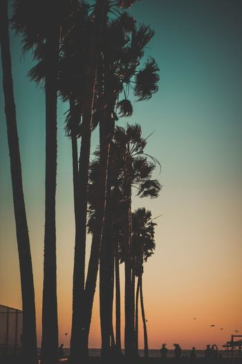 Day Venice Beach Tree Palm Tree Water Nature Sea Sky Sunset Growth No People Beauty In Nature Tranquil Scene Scenics Tranquility Waterfront Horizon Over Water Outdoors Night Beach Landscape