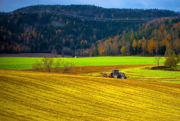 Scenic view of agricultural field during autumn