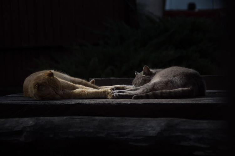 Cat Cats Wood Table Belgrade Serbia Cuddling Orange Silver  Canonphotography Sleep Sleeping Sleeping Cat Animal Animals Friends Grey Dark Highlight Love Loving Loving Life  Chiling Cute Cute Pets