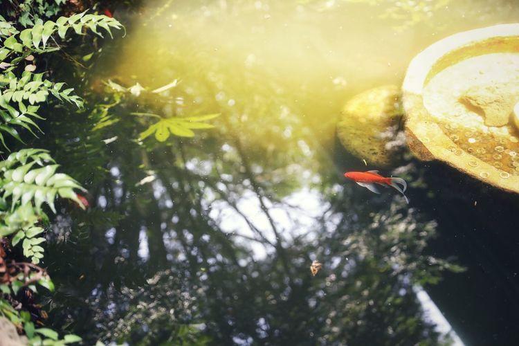 짖은 오후.. 유유자적 두둥실.. . . #하루한컷 #제주도 #비자림 #비자림화장실 #금붕어 #5DMARK4 #신계륵 #EF2470F28LIIUSM Tree Bird Flying Close-up